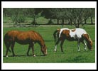 Horses Photo - Cross Stitch Chart