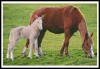 Horse with Foal - Cross Stitch Chart