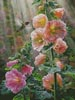 Ruby Throated Hummingbird & Hollyhocks - Cross Stitch Chart
