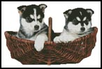 Husky Puppies - Cross Stitch Chart
