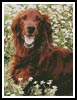 Irish Red Setter 2 - Cross Stitch Chart