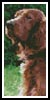 Irish Red Setter Bookmark - Cross Stitch Chart