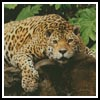 Jaguar - Cross Stitch Chart