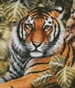Jungle Tiger (Crop) - Cross Stitch Chart