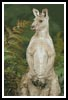 Kangaroo Photo - Cross Stitch Chart