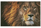 King of the Jungle - (Facebook Group) Cross Stitch Chart