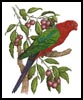 King Parrot - Cross Stitch Chart
