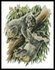 Koala Argument - Cross Stitch Chart