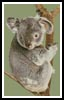 Koala in Tree - Cross Stitch Chart
