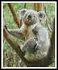Koala Scratch - Cross Stitch Chart