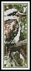 Kookaburra Bookmark - Cross Stitch Chart