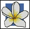 Large Blue Frangipani - Cross Stitch Chart
