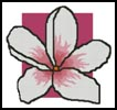 Large Pink Frangipani - Cross Stitch Chart