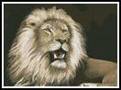 Lion 5 - Cross Stitch Chart