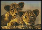 Lion Cubs - Cross Stitch Chart