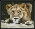 Lioness 2 - Cross Stitch Chart