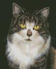 Look into my Eyes - Cross Stitch Chart