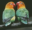 Lovebirds - Cross Stitch Chart