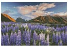 Lupins - Cross Stitch Chart