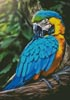 Macaw Profile - Cross Stitch Chart