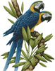 Majestic Macaws - Cross Stitch Chart