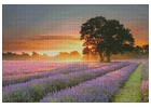 Mayfair Lavender at Sunrise - Cross Stitch Chart