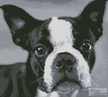 Boston Terrier Close Up - Cross Stitch Chart