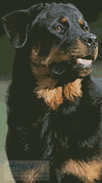 Rottweiler Photo - Cross Stitch Chart