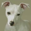 Miniature Jack Russell Terrier - Cross Stitch Chart