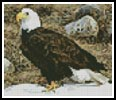 Mini Bald Eagle Photo - Cross Stitch Chart