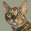 Mini Bengal Cat - Cross Stitch Chart