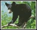 Mini Black Bear Cub - Cross Stitch Chart