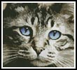Mini Blue Eyes - Cross Stitch Chart