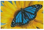 Mini Blue Monarch Sunflower - Cross Stitch Chart