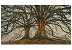 Mini Branching Out - Cross Stitch Chart