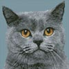 Mini British Shorthair Cat - Cross Stitch Chart