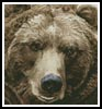 Mini Brown Bear - Cross Stitch Chart