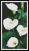 Mini Calla Lillies - Cross Stitch Chart