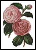 Mini Camellias 5 - Cross Stitch Chart