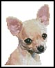 Mini Chihuahua - Cross Stitch Chart