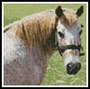 Mini Cleo the Pony - Cross Stitch Chart