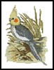 Mini Cockatiel - Cross Stitch Chart