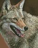 Mini Coyote Profile - Cross Stitch Chart
