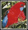Mini Crimson Rosella - Cross Stitch Chart