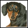 Mini Dachshund - Cross Stitch Chart