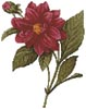 Mini Dahlia Double - Cross Stitch Chart