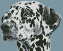 Mini Dalmatian Portrait - Cross Stitch Chart