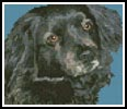 Mini Dog 4 - Cross Stitch Chart