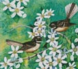 Mini Fantails and Clematis - Cross Stitch Chart