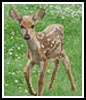 Mini Fawn - Cross Stitch Chart
